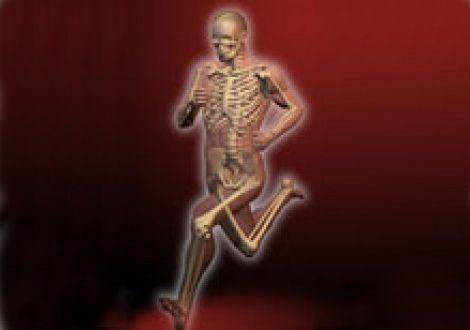 Sistema óseo del cuerpo del deportista
