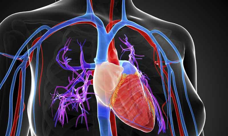 Todo corazón: cómo es y cómo funciona el motor del deportista