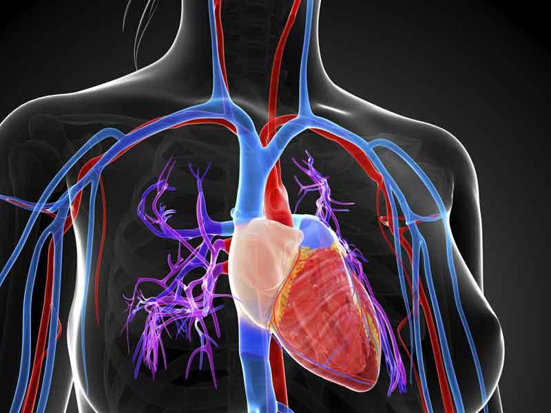 Así funciona... El latido cardiaco