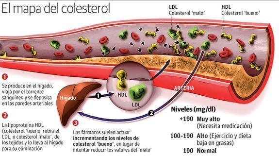 Resultado de imagen de Bajar el Colesterol