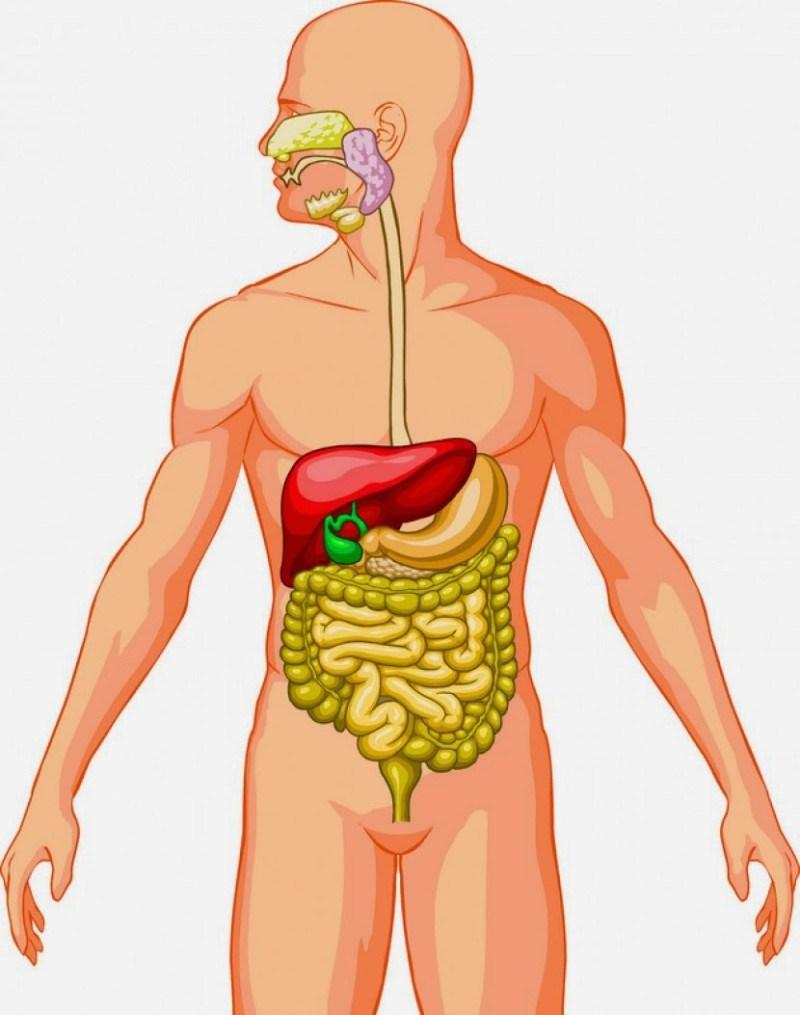 Cómo mejorar tu digestión