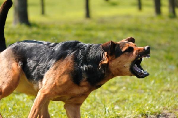 ¿Tienes miedo a los perros cuando corres?