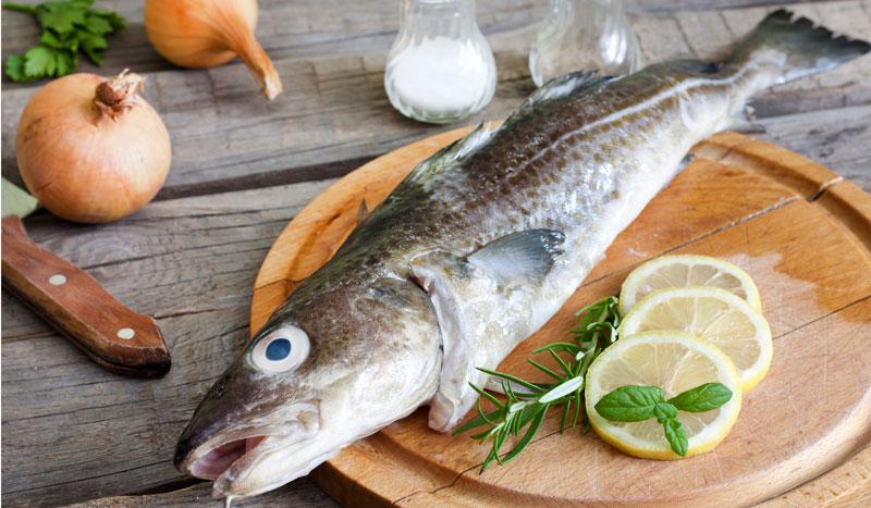 Bacalao, un superalimento proteico del mar del Norte