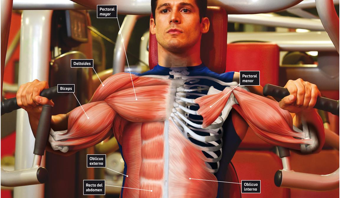 Pectoral: todos los ejercicios para trabajar este gran músculo
