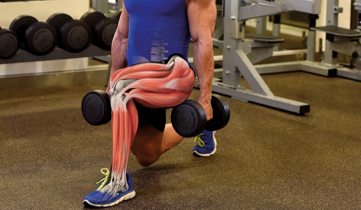 Los ejercicios para ganar fuerza y tonificar en el gimnasio