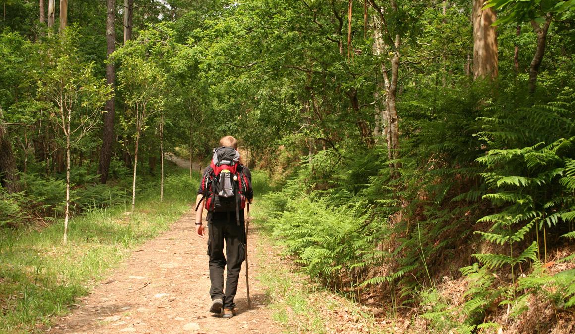 Los mejores tramos para caminar por el Camino de Santiago