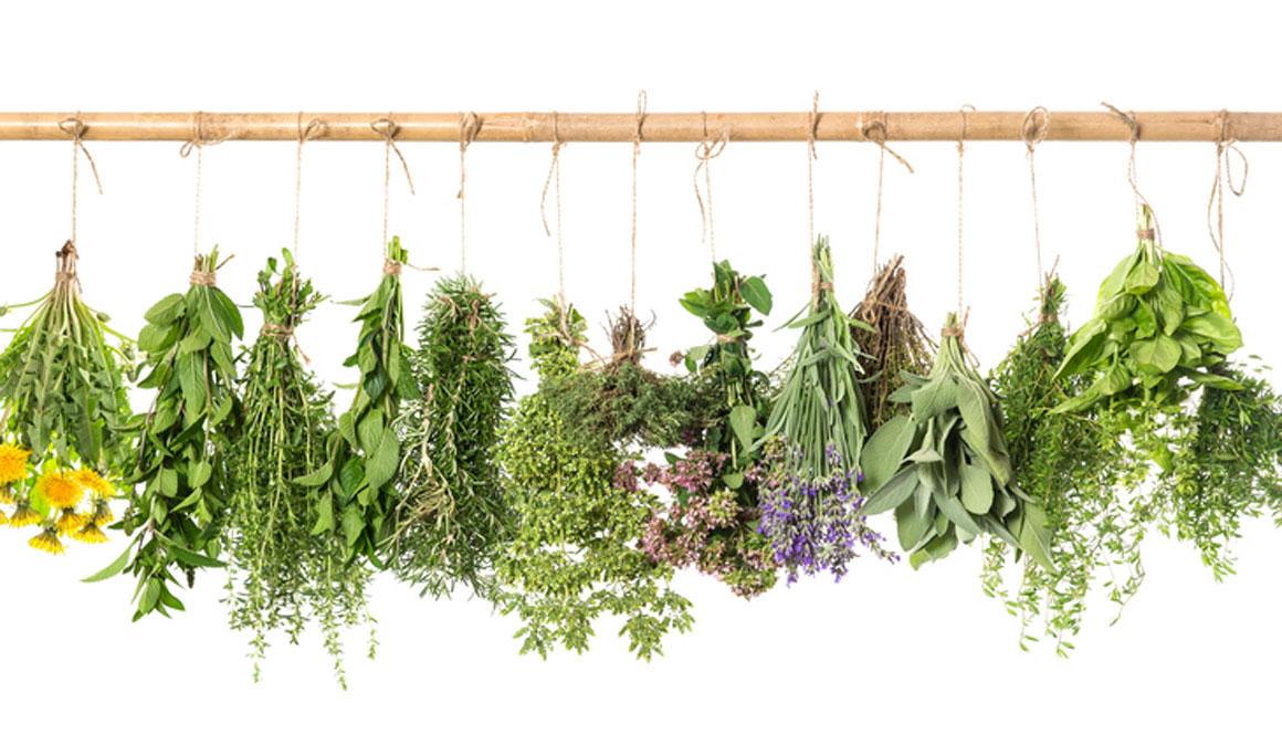 Hierbas arom ticas menos sal y m s sabor en el plato for Plantas aromaticas en macetas