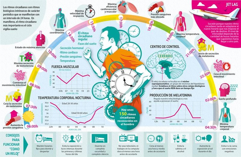Premio Nobel para los investigadores de los mecanismos moleculares que regulan los ritmos circadianos