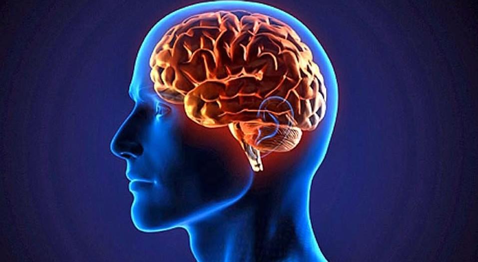 La dieta para un cerebro joven