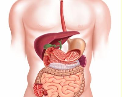Entrena tu digestión
