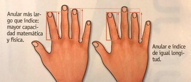 ¿Pueden tus dedos dar pistas de tu capacidad física?