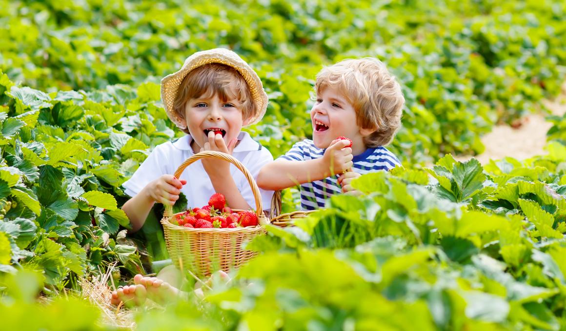 Fresas, un aliado para tu rendimiento y salud