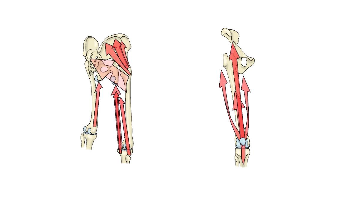 La rodilla: la importancia de un apoyo alineado