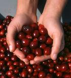 Nutrición deportiva:arándanos rojos o cranberries para la cistitis