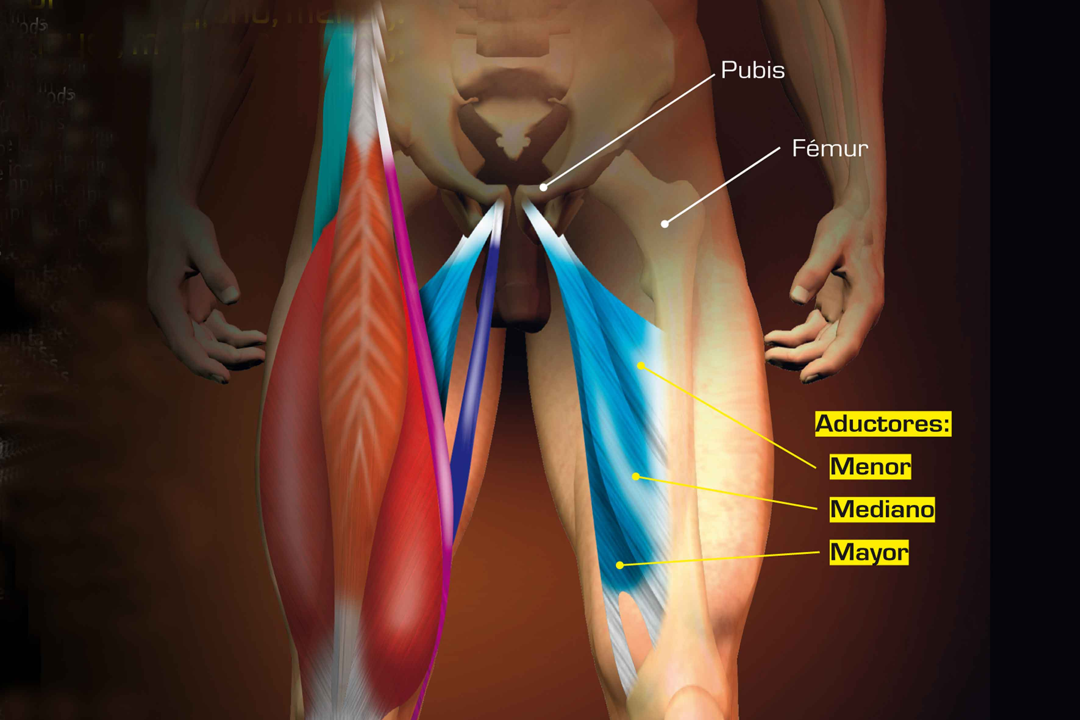 Aductores de piernas