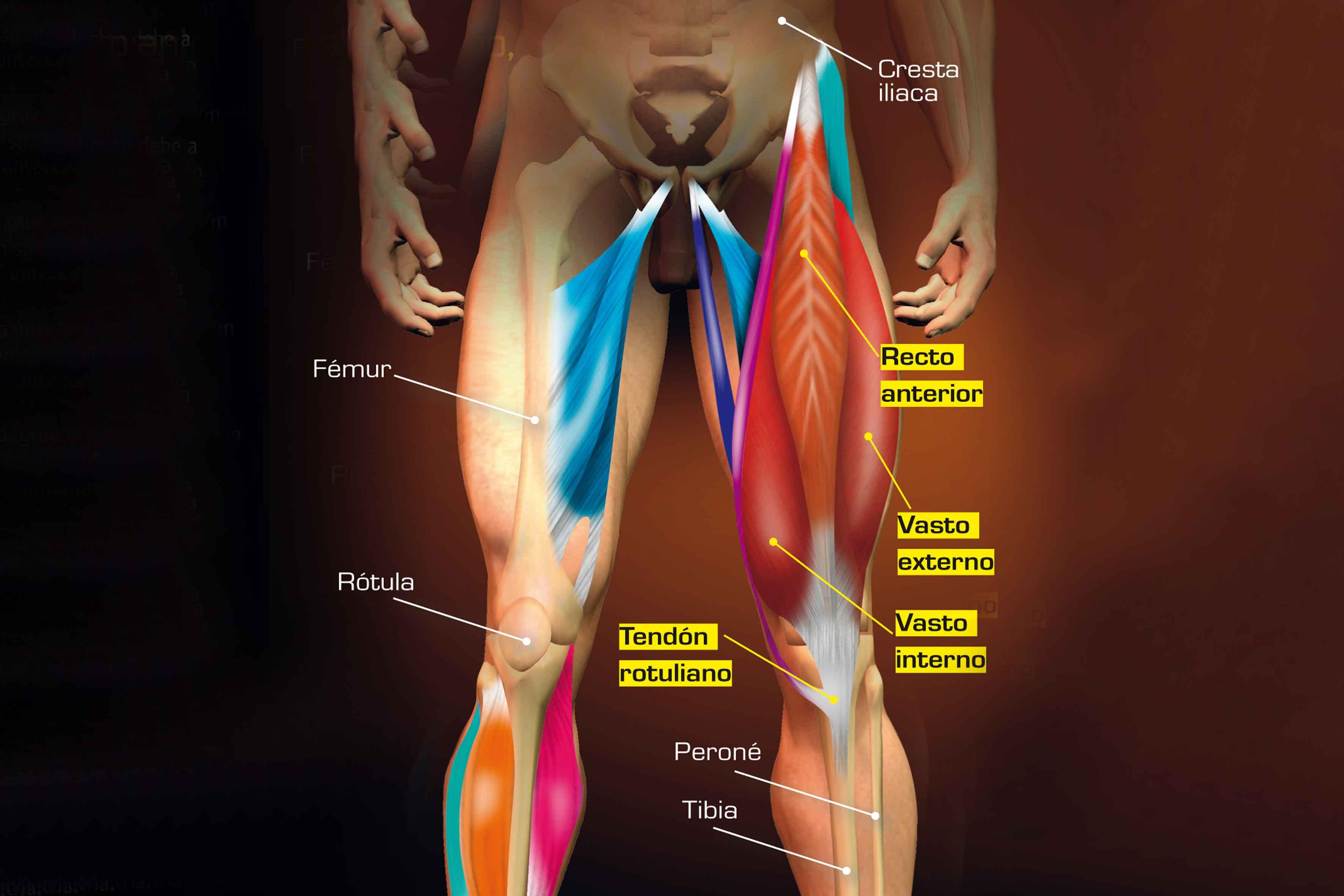 Lujoso Diagrama De Rodilla Imagen - Anatomía de Las Imágenesdel ...