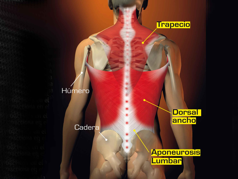 Fortalece y estirar el músculo dorsal ancho | Salud | Sportlife