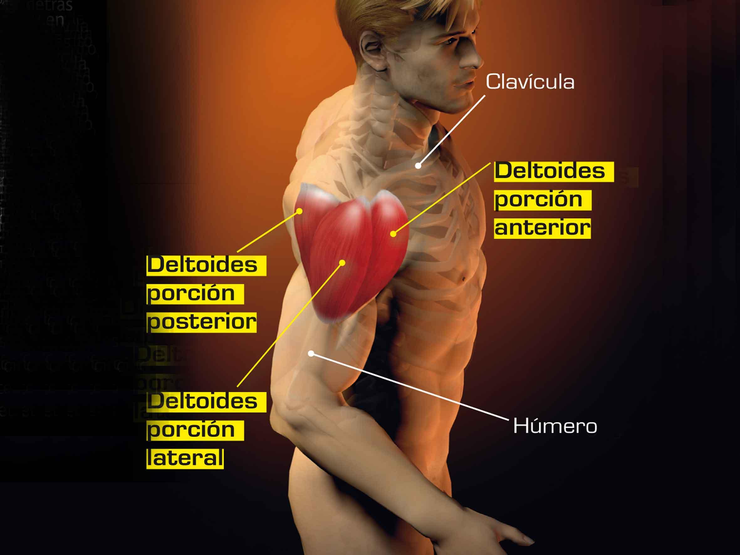 Estiramientos para los deltoides | Sportlife