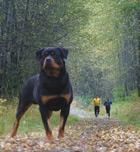 Cómo protegerte del ataque de un perro cuando corres