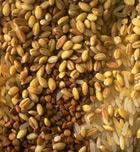 Alimentos deportivos: cereales integrales