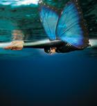 Ondulación: un ejercicio fácil para dominar la técnica de mariposa