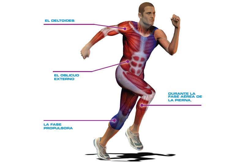 El cuerpo humano, diseñado para moverse