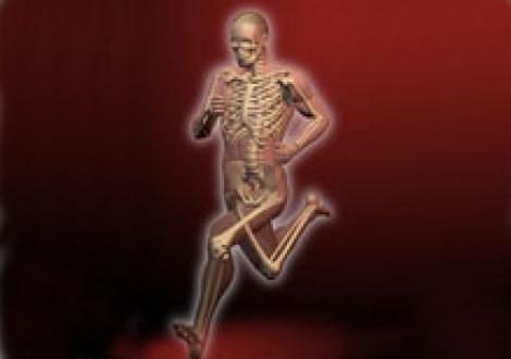 Sistema óseo del cuerpo del deportista | Sportlife