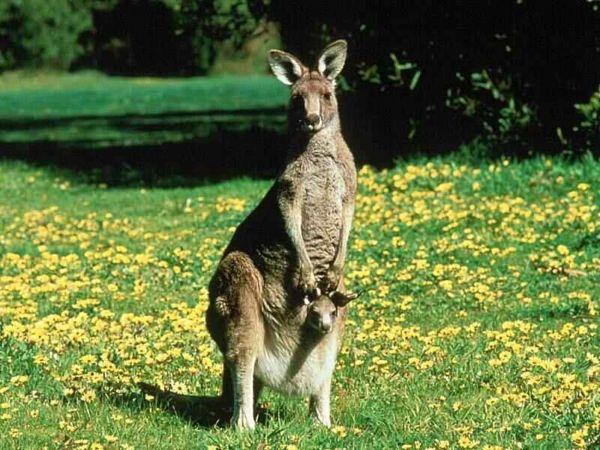 Los remedios naturales australianos