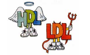El colesterol malo o LDL no es tan malo como se piensa