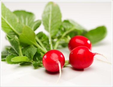 Alimentos frescos: Rábano