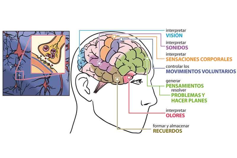 Sedentarismo mental, otro gran problema social