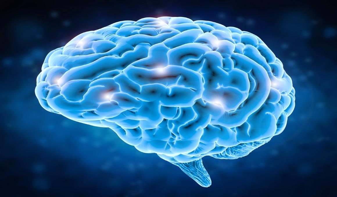 Así funciona... el metabolismo cerebral