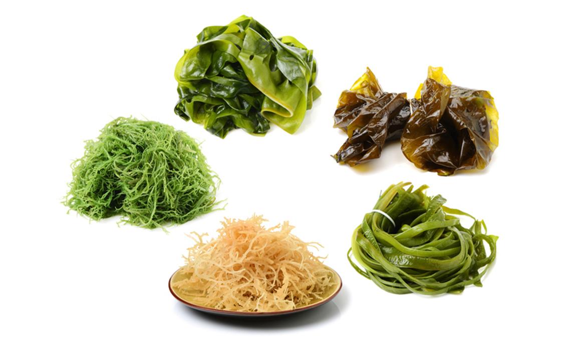El ranking de las algas más ricas en vitaminas y minerales