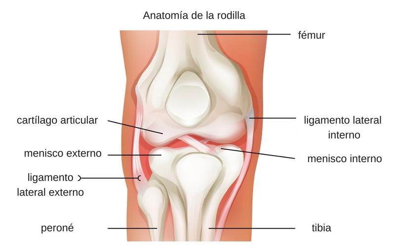 ¿Hay algo que pueda tomar que realmente me ayude con el desgaste de los cartílago de mi rodilla?