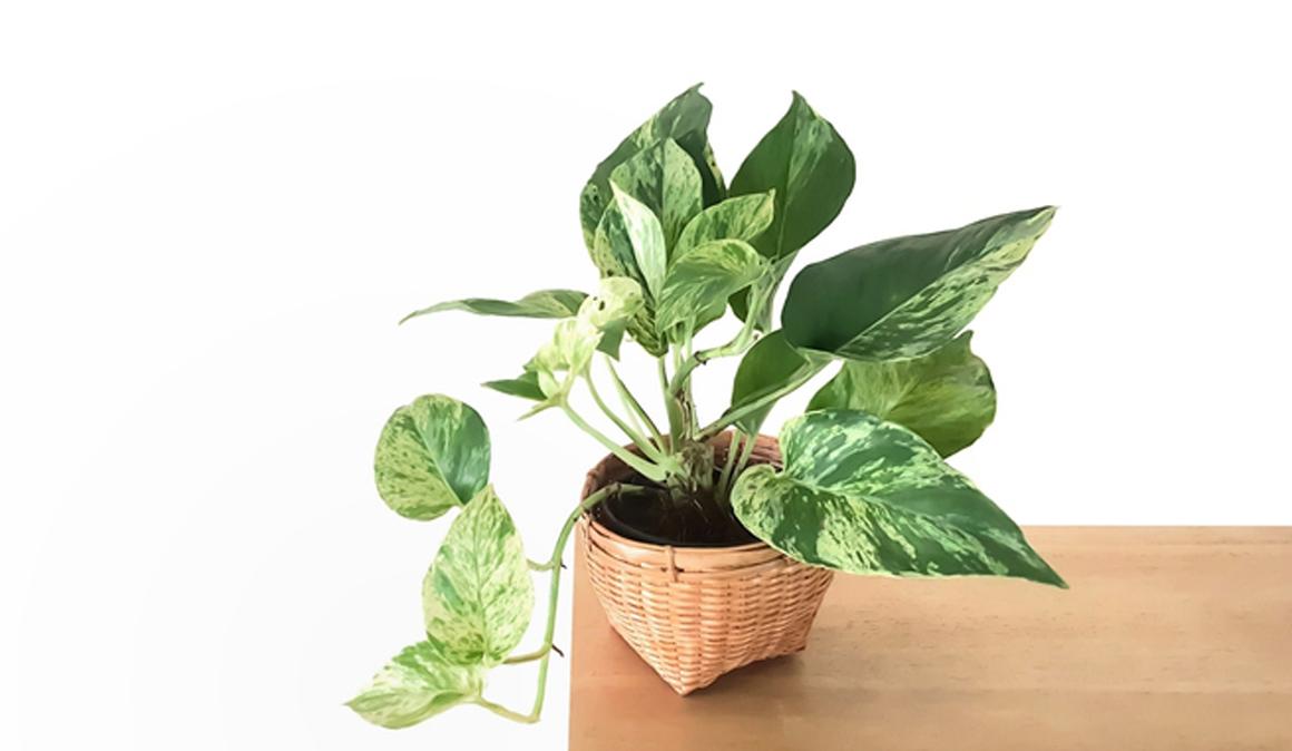 Un nuevo poto es capaz de limpiar el aire y eliminar sustancias carcinógenas