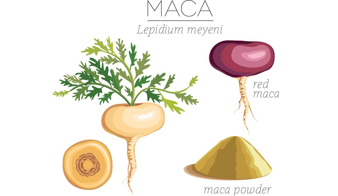 Descubriendo las ventajas de la raíz de maca, un alimento energizante que ayuda a equilibrar las hormonas de forma natural
