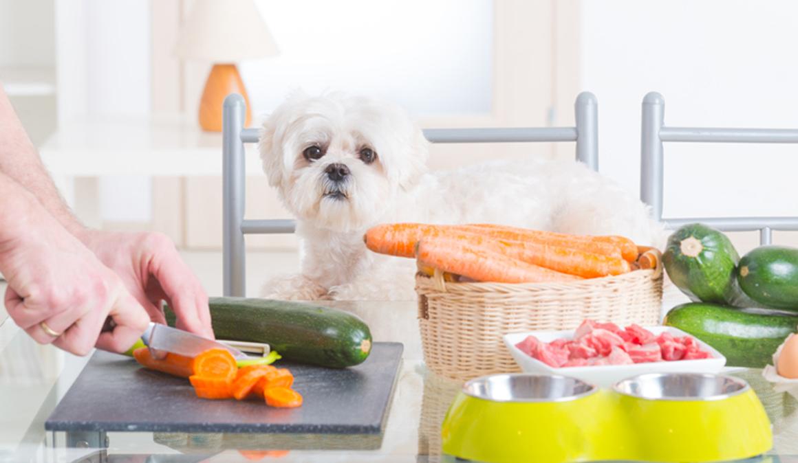 ¿Qué alimentos para personas son sanos y seguros para tu perro?