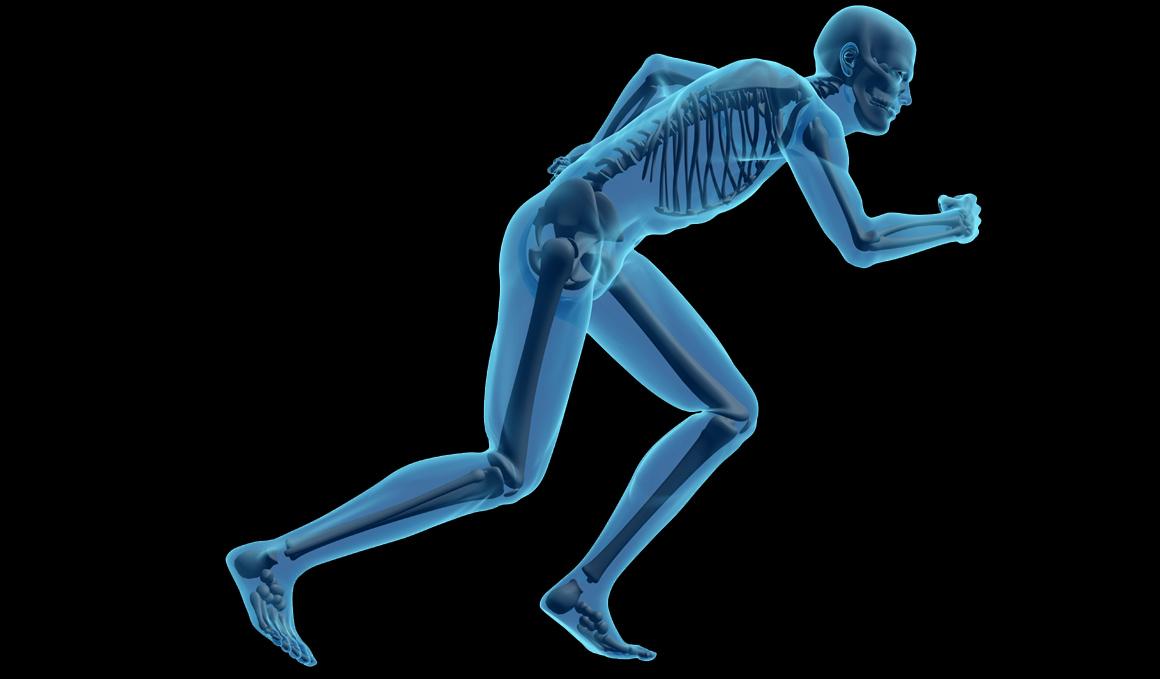 Huesos, todo lo que siempre quisiste saber sobre ellos