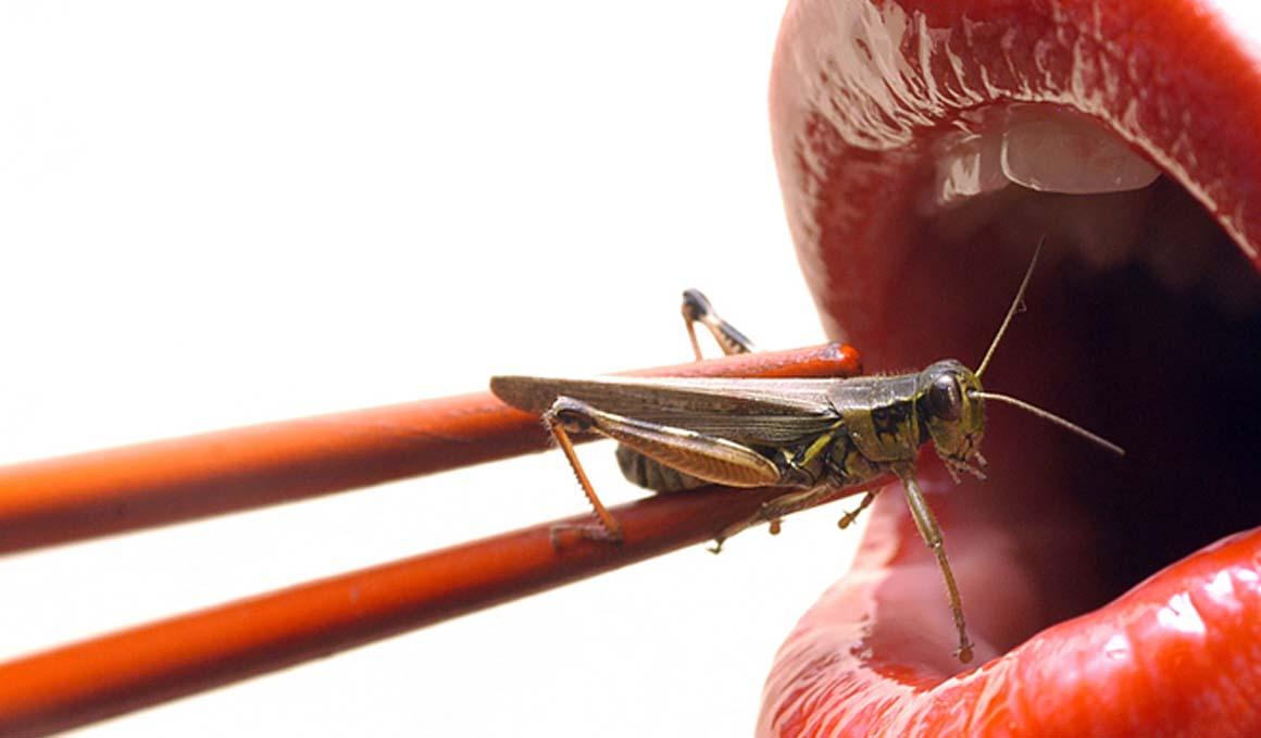 Cocina con insectos para lograr proteínas y poca grasa
