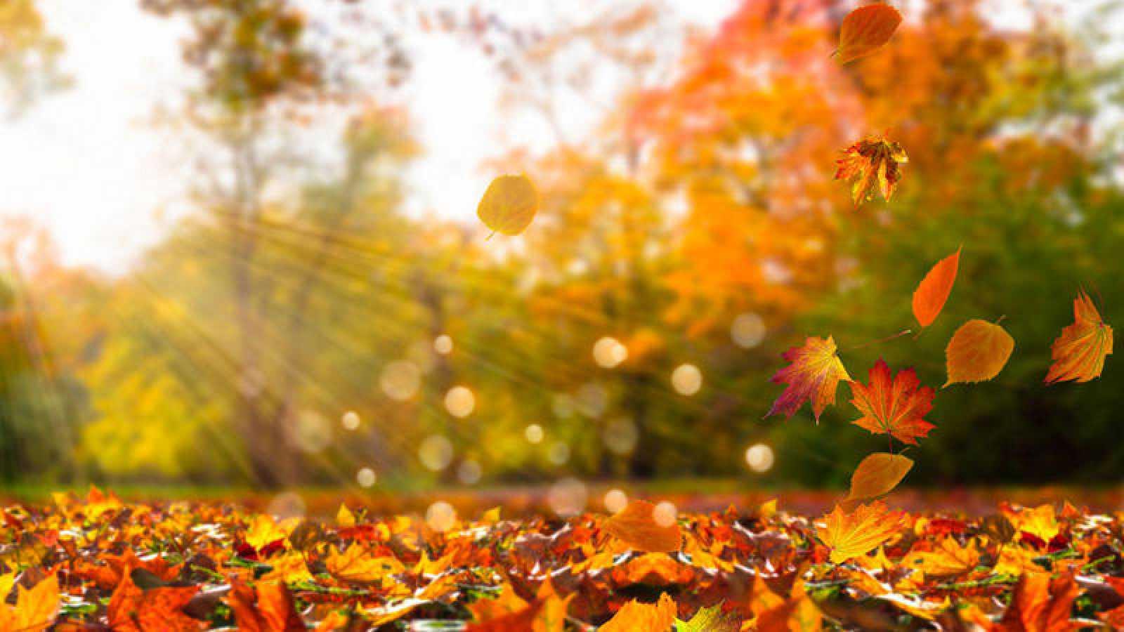 Los 5 trucos para ganar salud en otoño