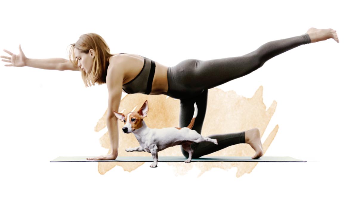 Vuelve el Yoga Dog Day el 16 de noviembre en Madrid