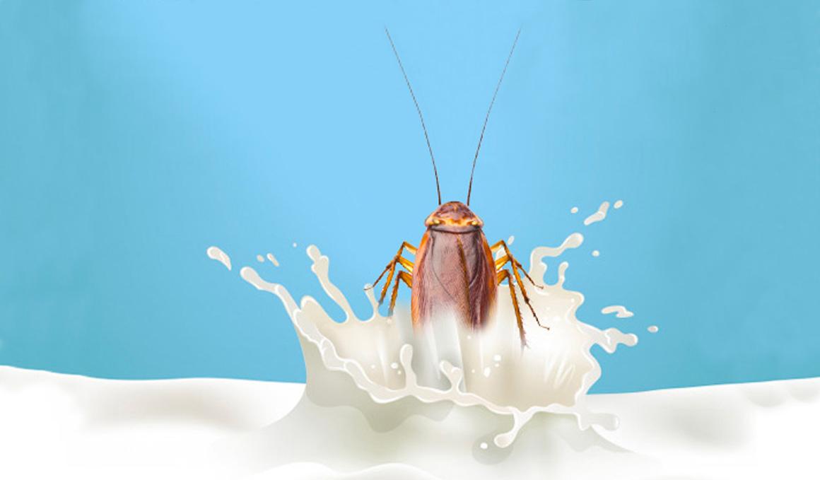 ¿Qué es la leche de cucaracha? La tontuna del mes