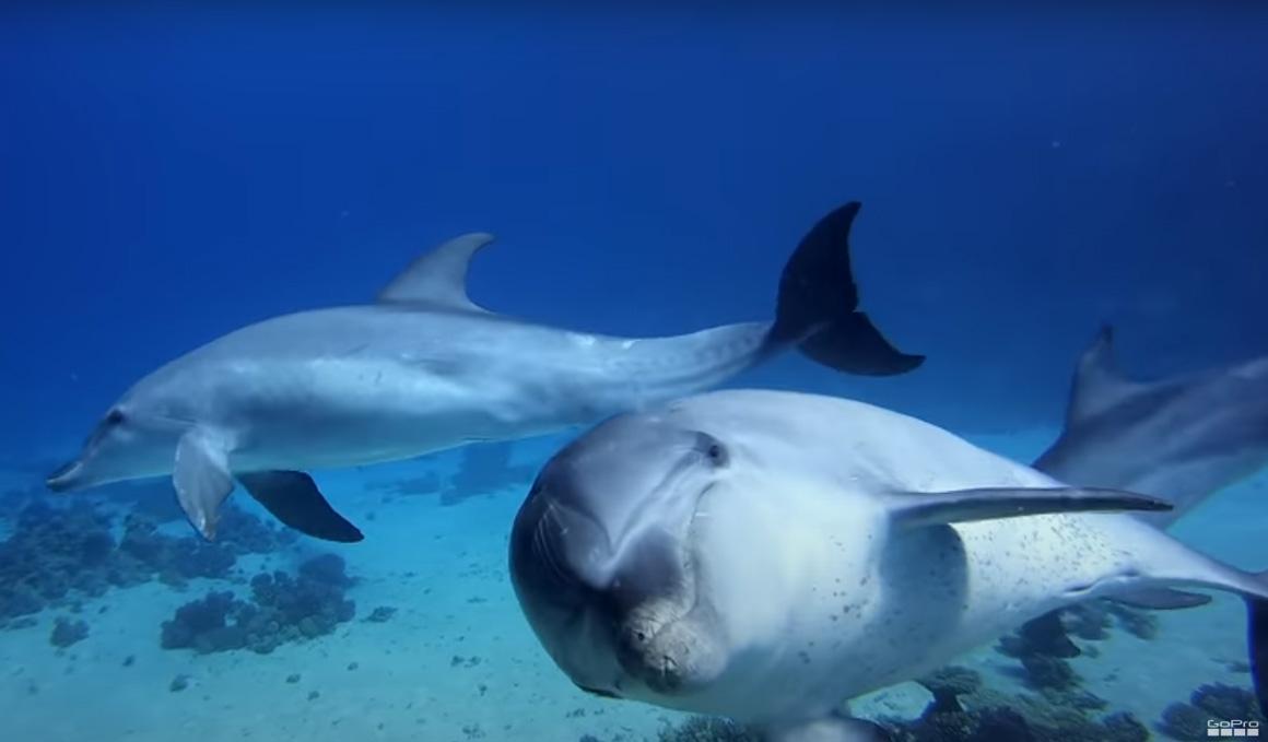 GoPro nos acerca al fascinante mundo de los cetáceos para proteger el medio ambiente
