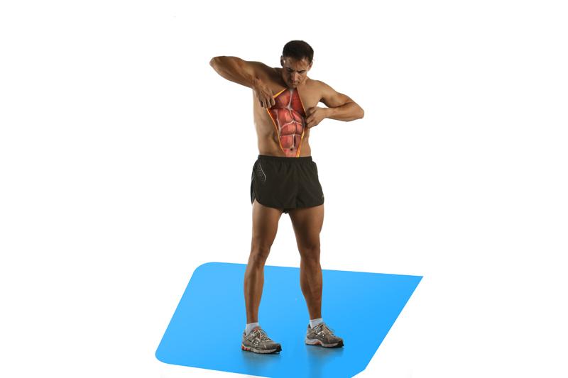 Así funcionan tus músculos