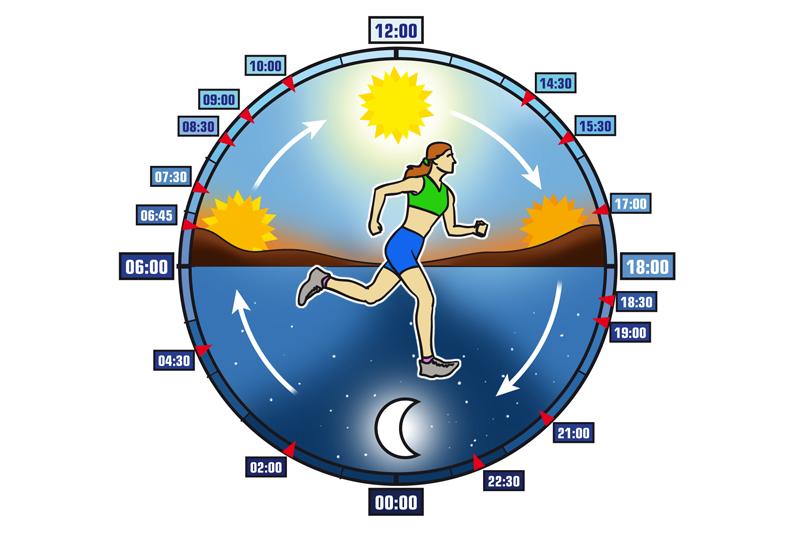 El ciclo circadiano: la rueda que hace girar tu vida