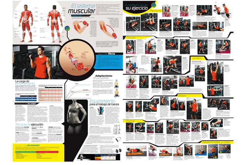 Así es el póster gigante de musculación que regala Sport Life