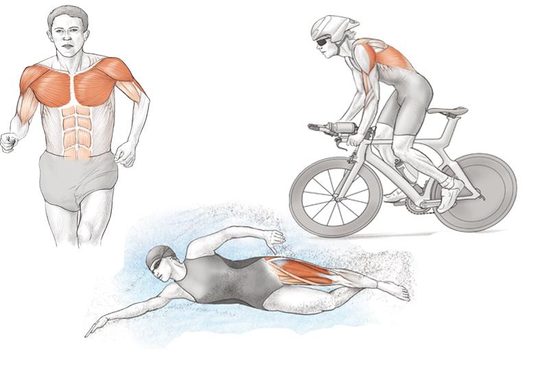 Anatomía del triatlón: el triatleta desde dentro