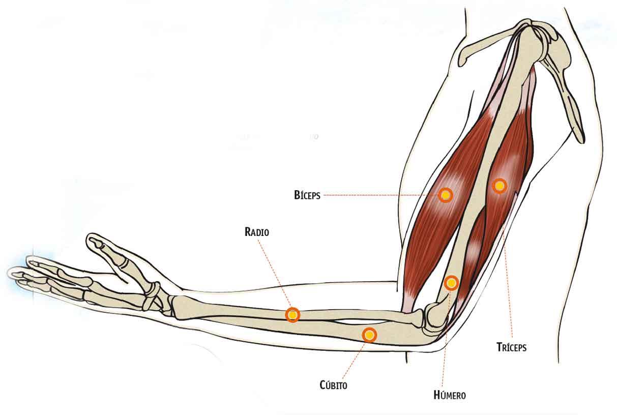 Ejercicios para cuidar la articulación del codo | Sportlife