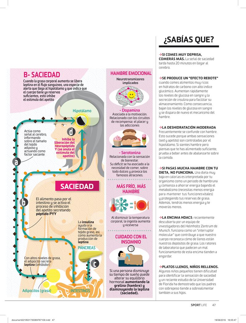 la hormona disminuye los sentimientos de hambre
