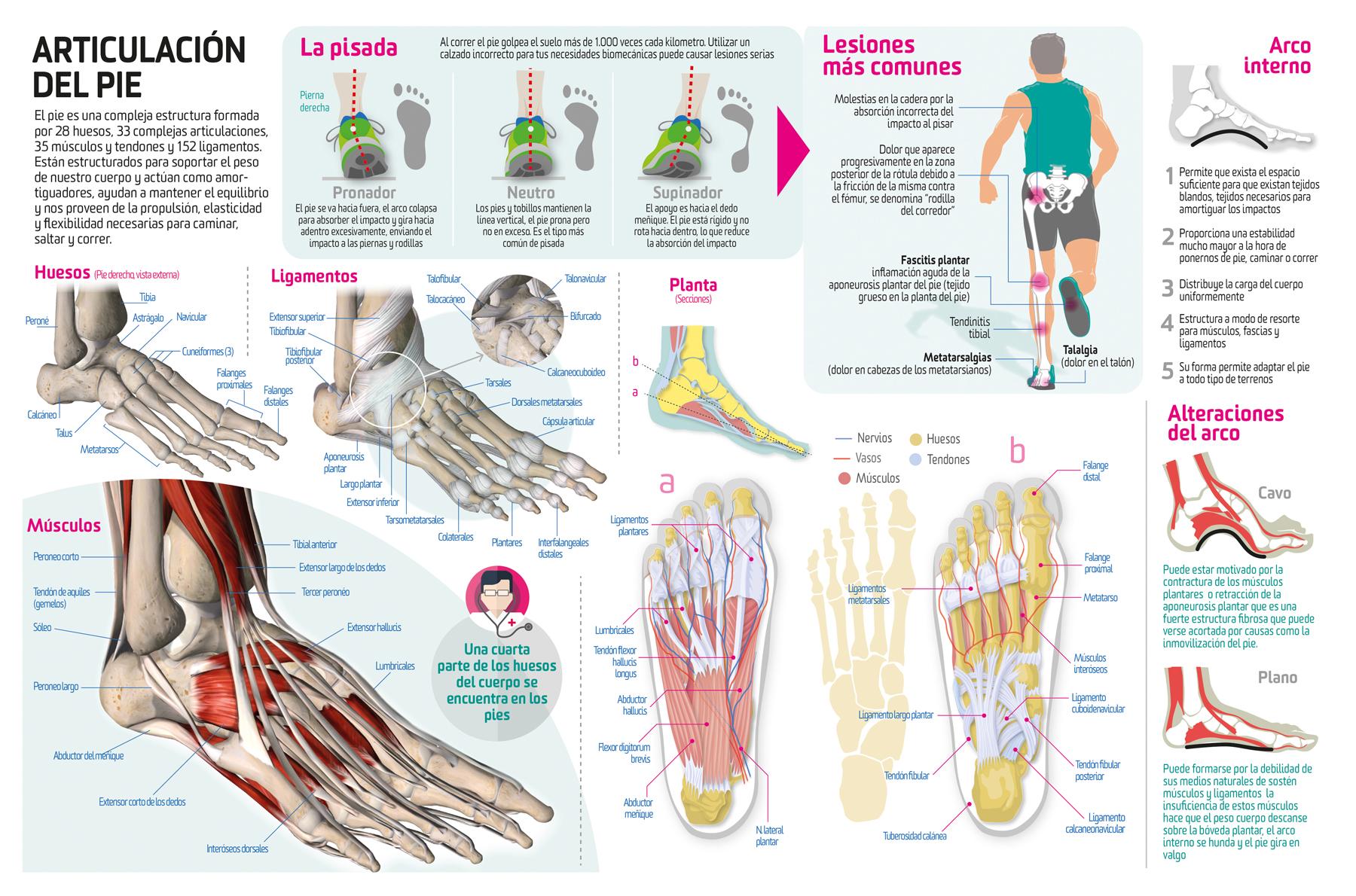 Así son nuestros pies por dentro y así funcionan